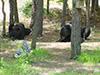 blackbear15.jpg (38461 bytes)