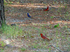 cardinals-bluejay.jpg (147602 bytes)