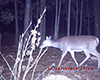 deer1.jpg (139407 bytes)