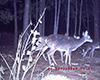 deer2.jpg (146336 bytes)