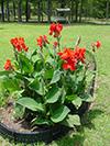 flowersredcanna.jpg (40335 bytes)