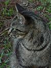 jcat1.jpg (125478 bytes)