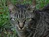 jcat2.jpg (127886 bytes)