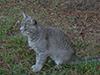 jcat3.jpg (143987 bytes)
