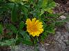 jflowers3.jpg (139388 bytes)