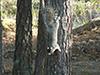 jsquirrel1.jpg (143795 bytes)