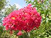 july15-flowers1.jpg (40939 bytes)