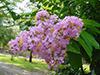 july15-flowers2.jpg (40400 bytes)