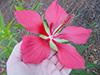 july15-flowers4.jpg (39604 bytes)