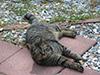 kitties4.jpg (170773 bytes)