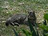 kitties5.jpg (166168 bytes)