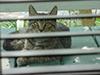 kitty1.jpg (37651 bytes)