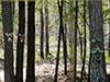 treefaces.jpg (177083 bytes)