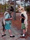 xmas06-2wolvesfight.jpg (89474 bytes)