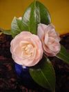 xmas06-winter flowers.jpg (130064 bytes)