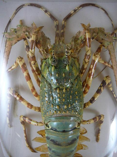 Bug Amp Crab Specimens
