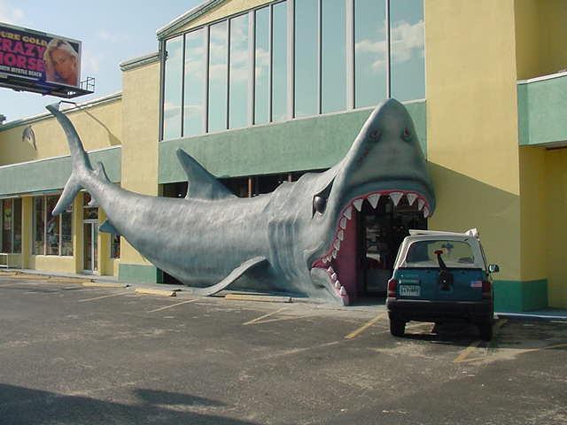 Biggest Shark Tooth Found At Myrtle Beach