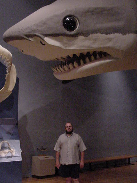 History Fossil Megalodon Shark Tooth Teeth Photos