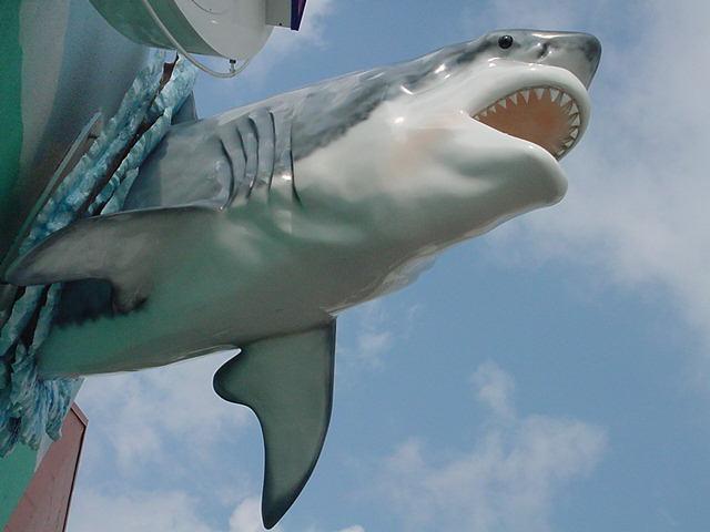 Bigger Than Megalodon Shark Toy : History fossil megalodon shark tooth teeth photos
